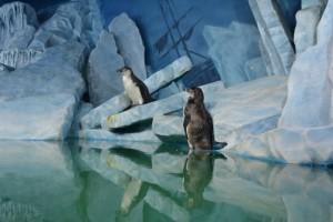 пингвины в океанариуме