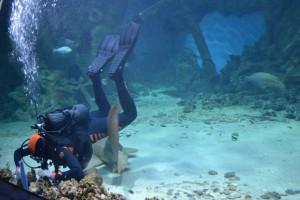океанариум аквалангист